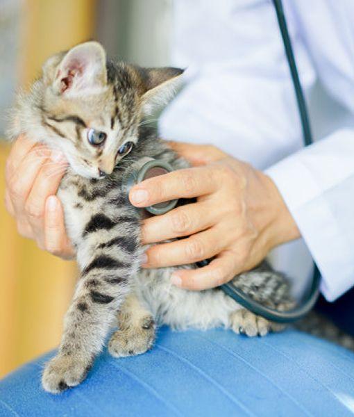 atencion-veterinaria-en-tienda-de-la-mascota-manizales-servicios-cuidado-mascotas-perro-gato-pets